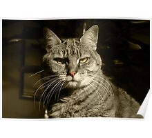 Portrait of a Tabby Cat Poster