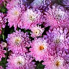 Mums in Mauve by Nadya Johnson