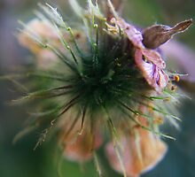 to burst open (from wild flowers collection) by Antanas