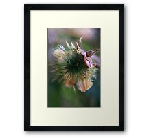 to burst open (from wild flowers collection) Framed Print