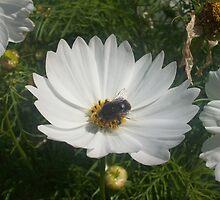 Bee Happy! by EternalAvalon