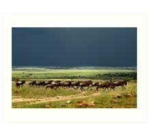 Wildebeest on the stampede Art Print