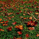 Cliche Leaves by Mauricio Molina