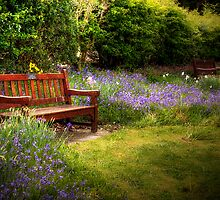Resting Place by Linda  Morrison