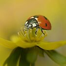 The first ladybug by EbyArts