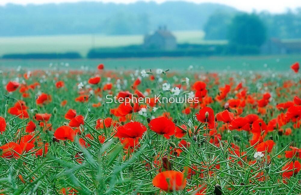 Poppy Field, Norfolk, England by Stephen Knowles
