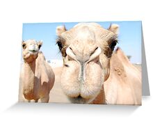 Friendly Camels Greeting Card