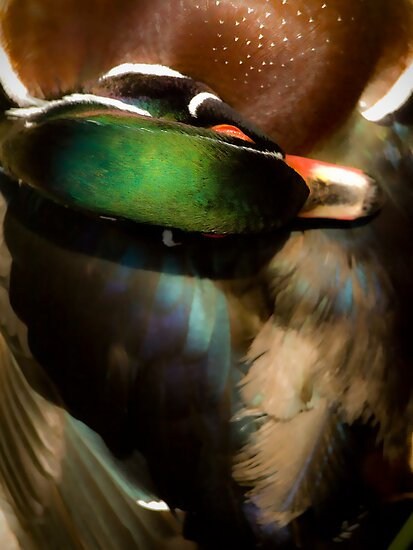 Wood Duck Abstract by G. Patrick Colvin