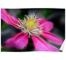 Clematis In Pink Poster