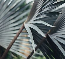 Palm Abstract by Bethany Helzer