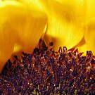Sunny Side Up! by DanaMS