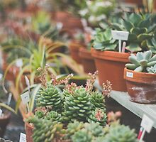 The Succulent House by Bethany Helzer