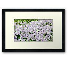 Purple flower bed Framed Print