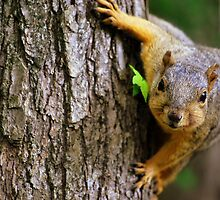 Squirrelly by Gregory Ballos | gregoryballosphoto.com