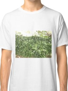 wild garden garlic Classic T-Shirt