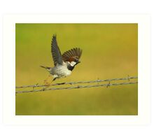 House Sparrow Take-Off Art Print