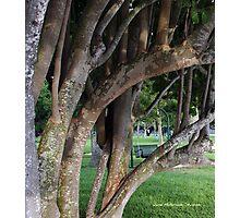 Family Tree ? Photographic Print