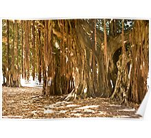 Under the Banyan Tree Poster