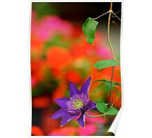 Color Me Clematis Poster