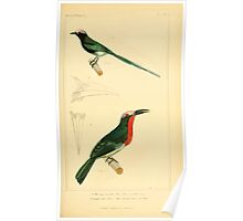 The Animal Kingdom by Georges Cuvier, PA Latreille, and Henry McMurtrie 1834 682 - Aves Avians Birds Poster