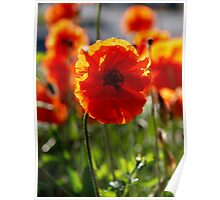 From the field of poppies series Poster