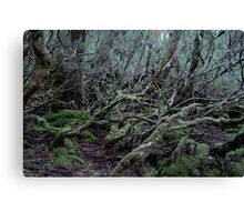 Under the Gondwana Rainforest Canopy  Canvas Print