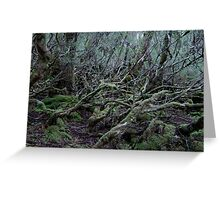 Under the Gondwana Rainforest Canopy  Greeting Card