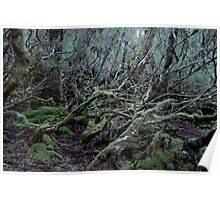 Under the Gondwana Rainforest Canopy  Poster