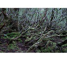Under the Gondwana Rainforest Canopy  Photographic Print