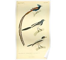 The Animal Kingdom by Georges Cuvier, PA Latreille, and Henry McMurtrie 1834 658 - Aves Avians Birds Poster