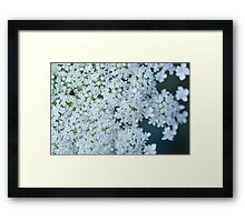 Faded Queen Ann's Lace Framed Print
