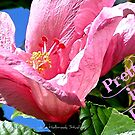 Pretty in Pink by June Holbrook
