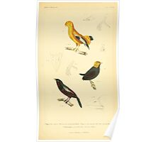 The Animal Kingdom by Georges Cuvier, PA Latreille, and Henry McMurtrie 1834 680 - Aves Avians Birds Poster