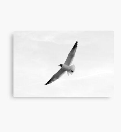 Blue Ribbon Seagull Canvas Print