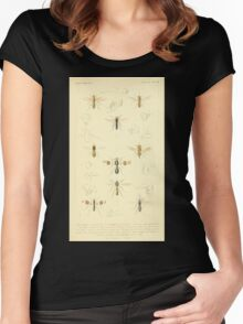The Animal Kingdom by Georges Cuvier, PA Latreille, and Henry McMurtrie 1834  533 - Insecta Insects Women's Fitted Scoop T-Shirt