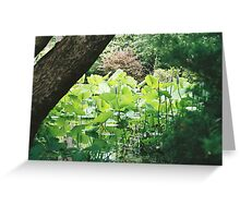lillypads and koi Greeting Card