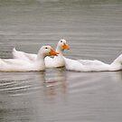 Duck's in Kentucky lands by Bonnie Pelton