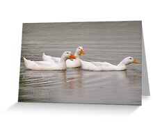 Duck's in Kentucky lands Greeting Card