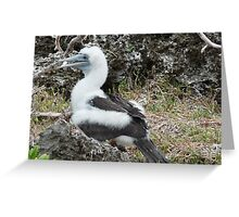 Unbelievable Booby Greeting Card