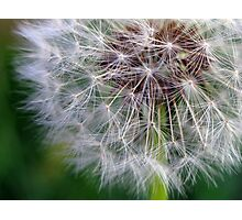 spreading seeds Photographic Print
