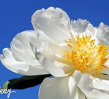 Sunny Side Up by milkayphoto