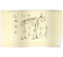 The Animal Kingdom by Georges Cuvier, PA Latreille, and Henry McMurtrie 1834 621 - Mammalia Mammals Poster