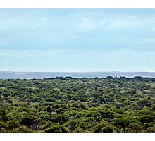 Bushveld Landscape Photographic Print