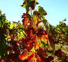 Autumn wine by Monique Basson