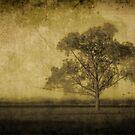 Lone Tree by crossmark