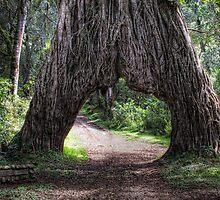 Big Tree Arch by Scott Ward