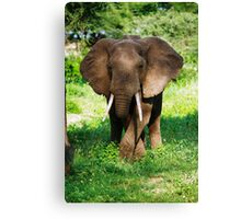 Grazing Elephant Canvas Print