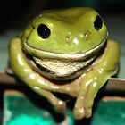 GREEN TREE FROG by DUNCAN DAVIE
