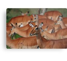 No, your other left! Metal Print