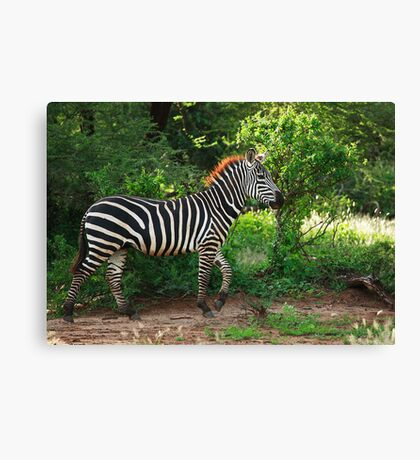 Out for a Stroll Canvas Print